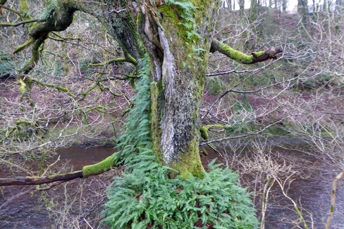 tree with ferns