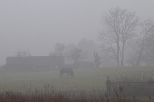 view of field from stubholm in mist