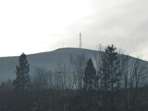 Warbla on a frosty day