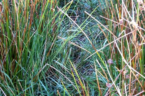 warbla web