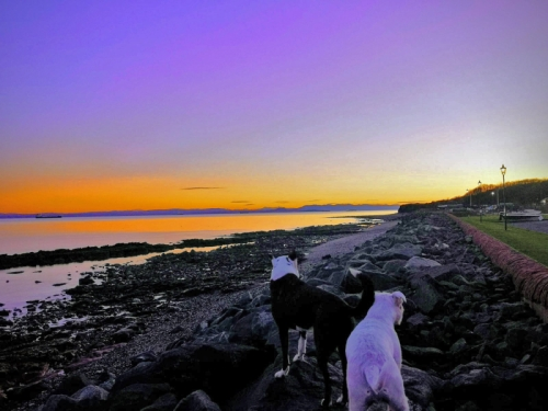 wemyss dogs at sunset