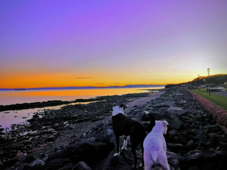 wemyss dogs at sunset