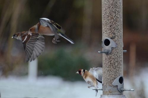 birds leaving feeder