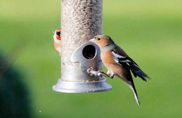 bright eyed birds