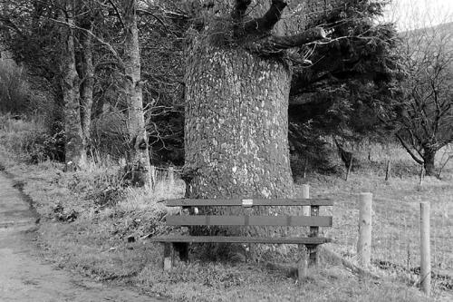bw bench