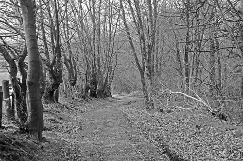 bw wood walk