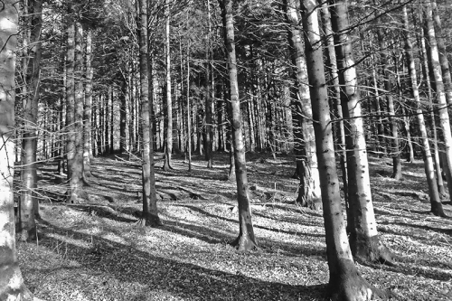 bw woods