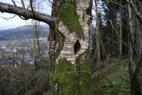 decorative tree bark