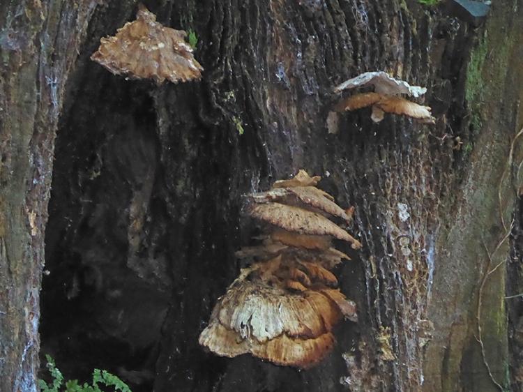 decrepit fungus
