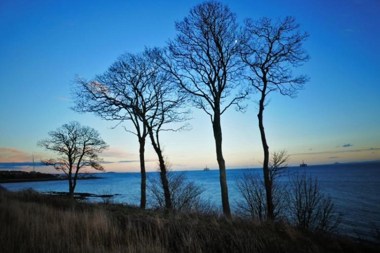east wemyss seaside trees