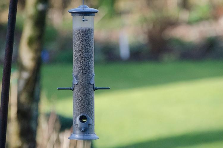 empty feeder