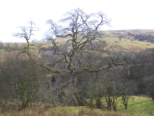 expressive tree