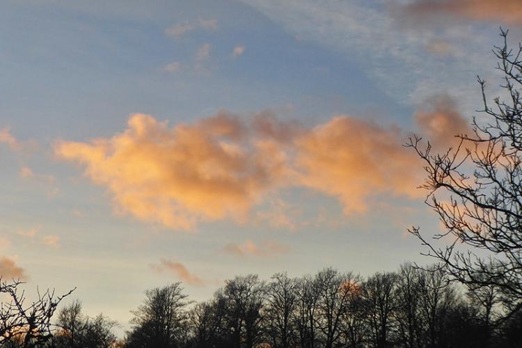fluffy pink cloud
