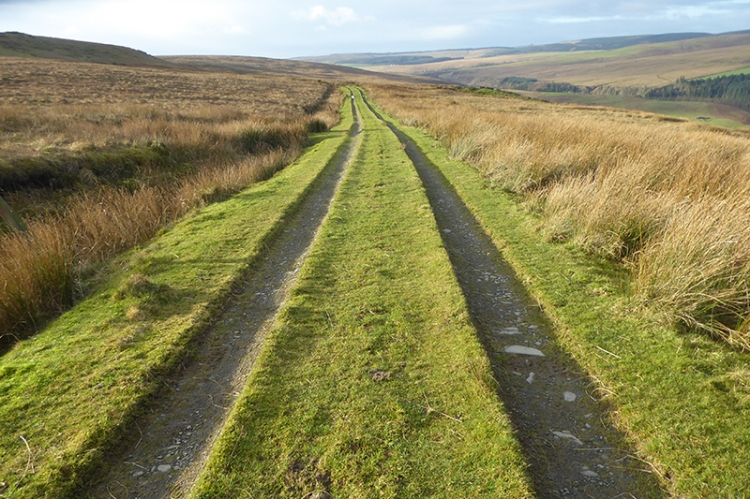 green road on warbla