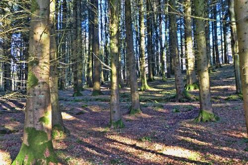 holmhead woods