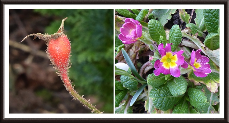 january garden colour