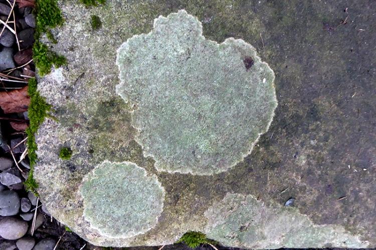 lichen on back step