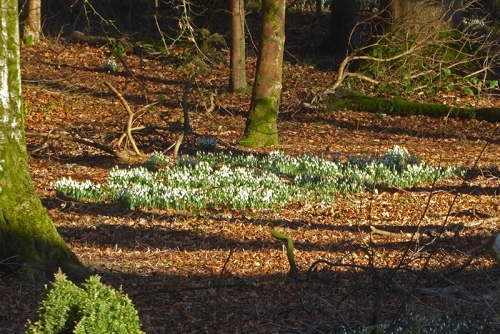 lodge gates snowdrops