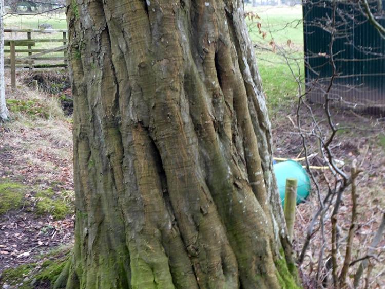 many treed trunk