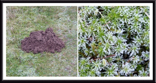 molehill and frozen moss