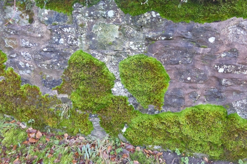 moss at springhill