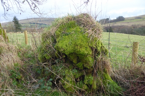 moss covered stump