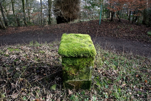 moss table gaskells
