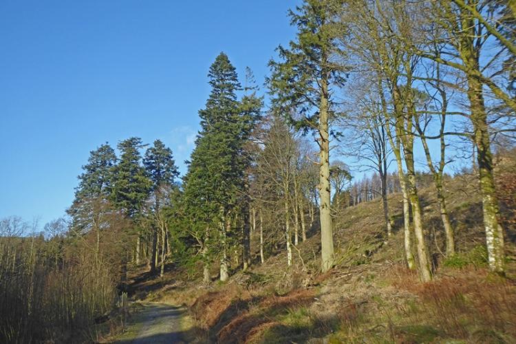 pines on track