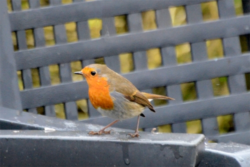 robin on arm of chair