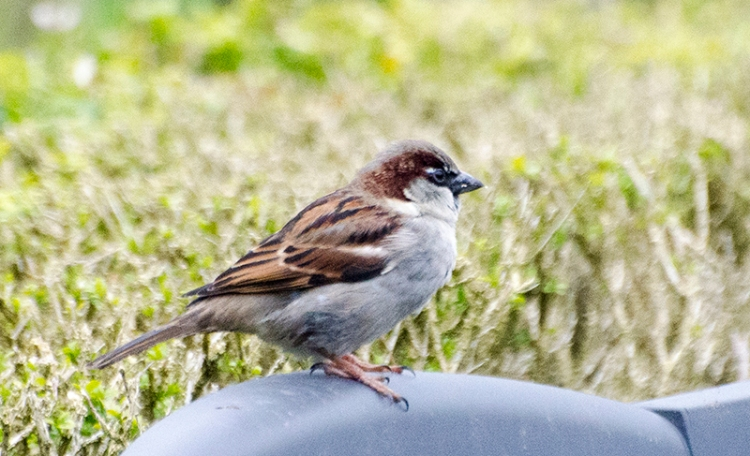 sparrow taking the chair