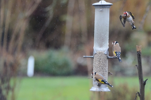 three stacked goldfinches