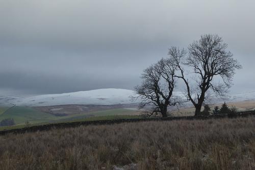 trees on whita snow