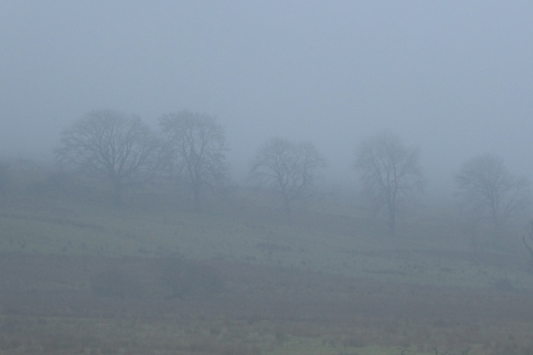 very misty trees