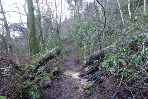 walk 2 path