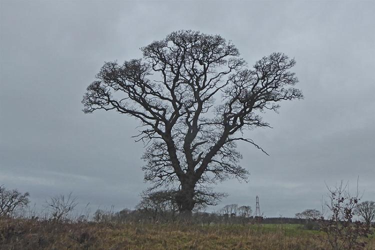 bare tree Canonbie road
