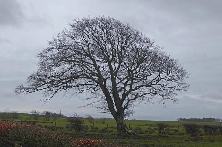 bare tree chapelhill