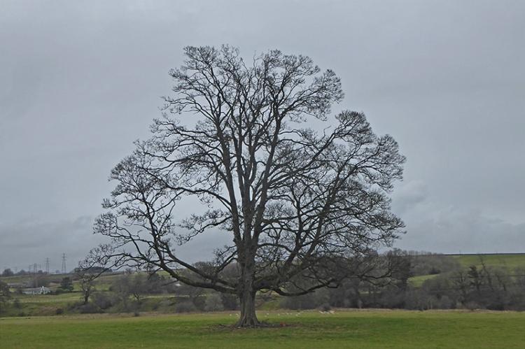 bare tree neat Canonbie