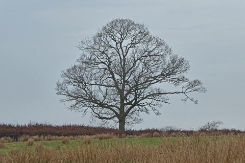bare tree windy hill