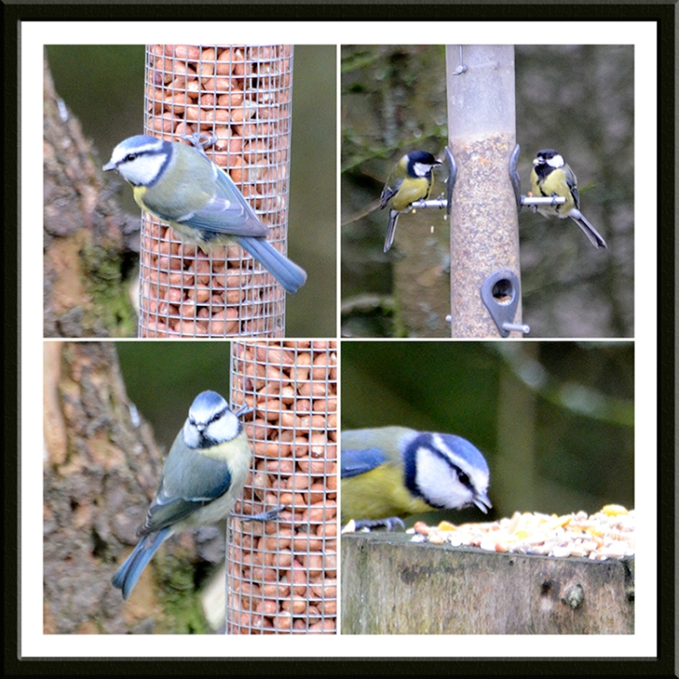 blue and great tits Laverock