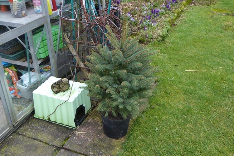 christmas tree in garden