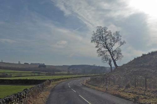 leaning tree steele road