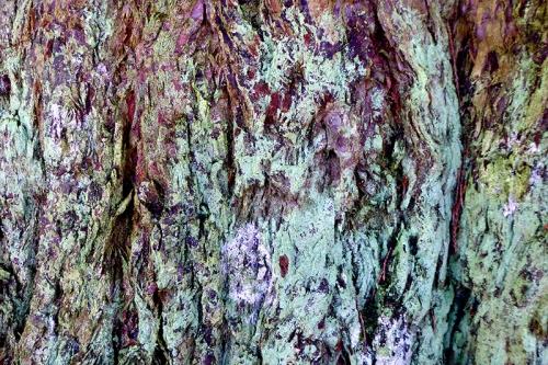 park tree bark