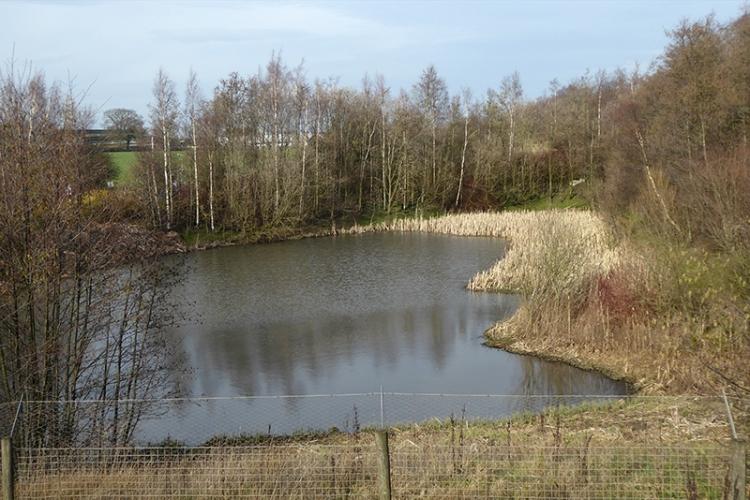 pond near asda