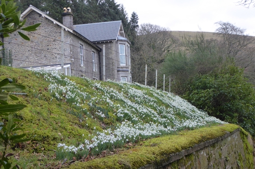 potholm farm with snowdrops