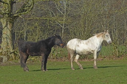 rockcliffe horses