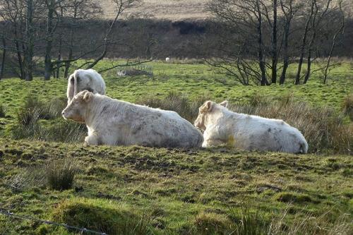 sitting bulls