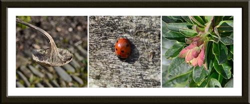 sunflower, ladybird and euphorbia