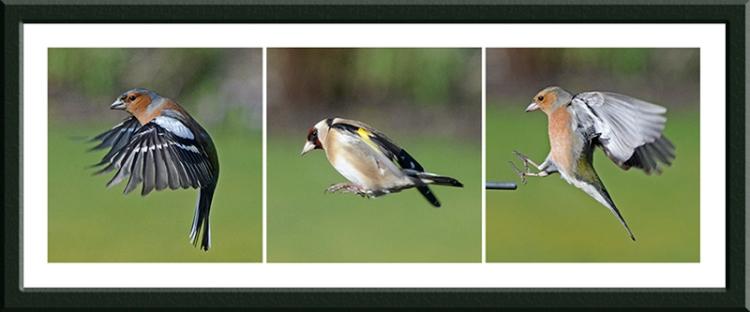 three flying birds