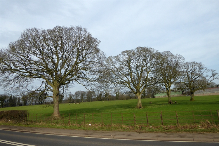 three trees brampton road