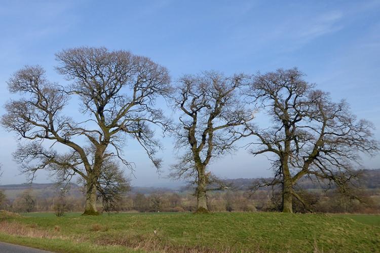 three trees grainstonehead